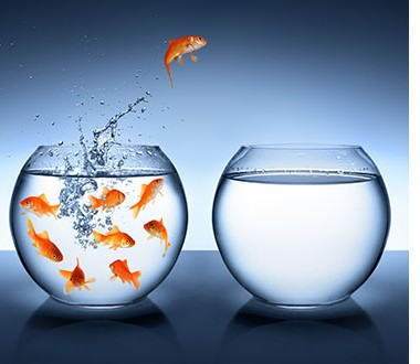 fishspace